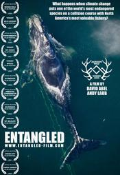 Entangled: The Race to Save Right Whales from Extinction EgyBest ايجي بست