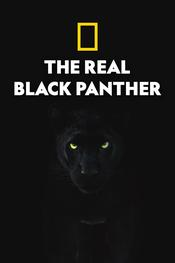 The Real Black Panther EgyBest ايجي بست